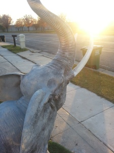 An Elephant I saw in someone's yard in Kaysville.